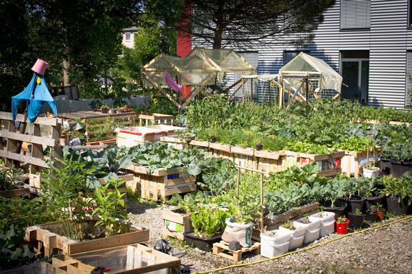 k ln urban gardening. Black Bedroom Furniture Sets. Home Design Ideas